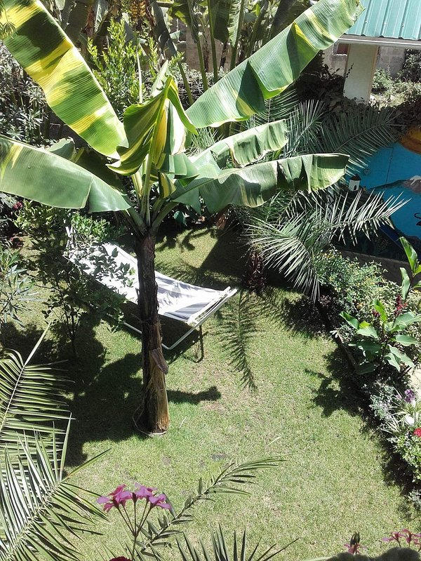 Garden in day time, guests may laying in sunshine