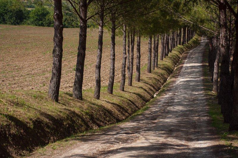 Agriturismo La Pieve -Casale di charme, location de vacances à Bibbiano