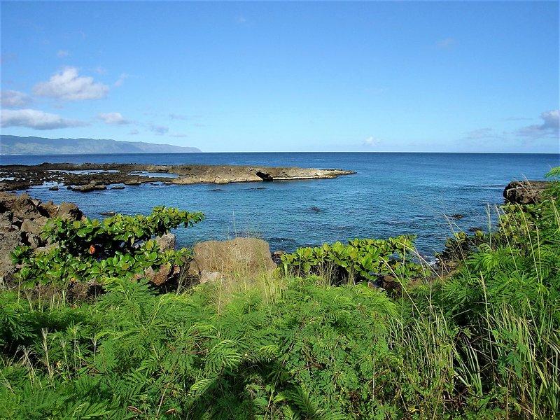 Tiburones Cove Marina Life Park a pocos pasos de distancia! El mejor buceo en la isla!