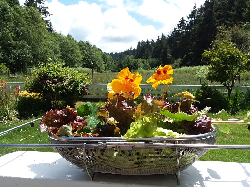 Freshly picked lettuce overlooks part of our 80 acres.