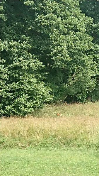 Deer in the Dragon House Garden