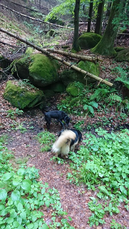 You will find many streams in the forest, where your dog can quench his thirst.