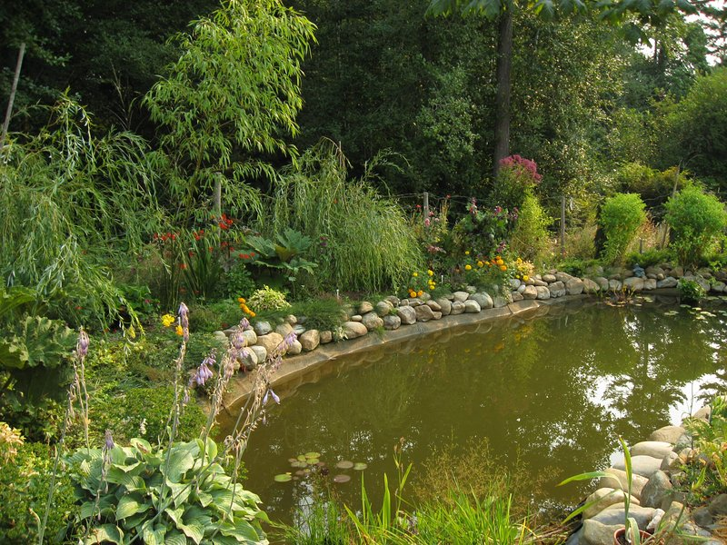 pond with goldfish surrounded by greenery