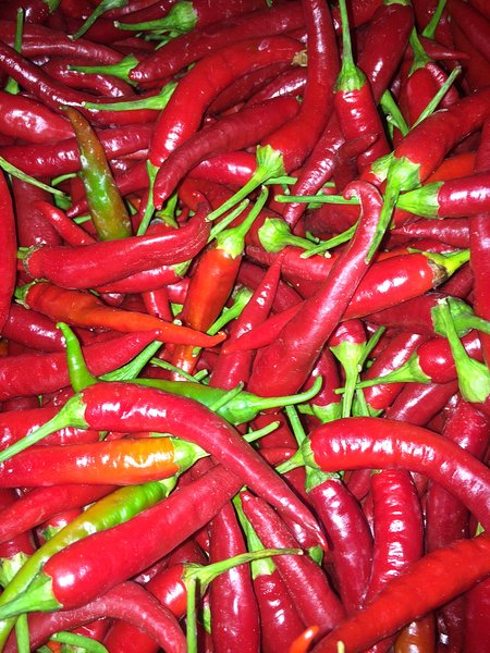 Local varieties of spicy Calabrian chili