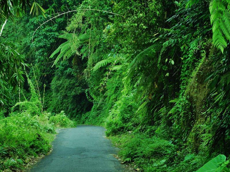 Il y a une beauté tout autour, de nombreux endroits pour la marche, trekking dans la jungle, rizières. Tout beau