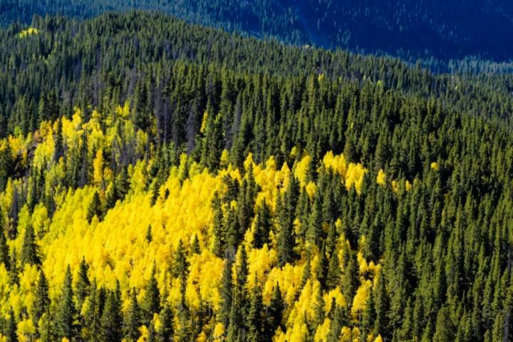 The Mountains Are Bursting With Color In The Fall
