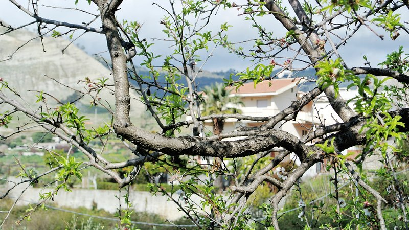 Bed&Breakfast Il Gelsomino Il Cedro, vacation rental in Bova Marina