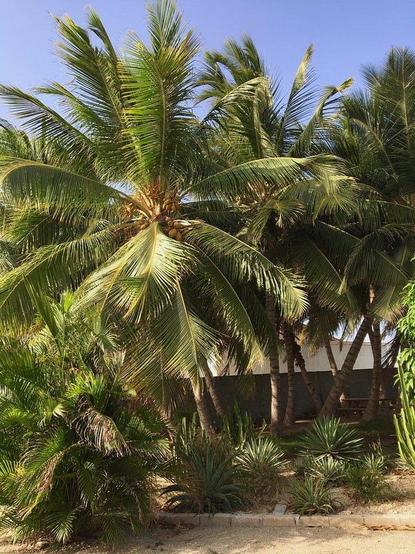 Galería de la palmera