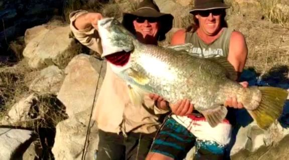 Big barra caught on a lure in pikes crossing creek.