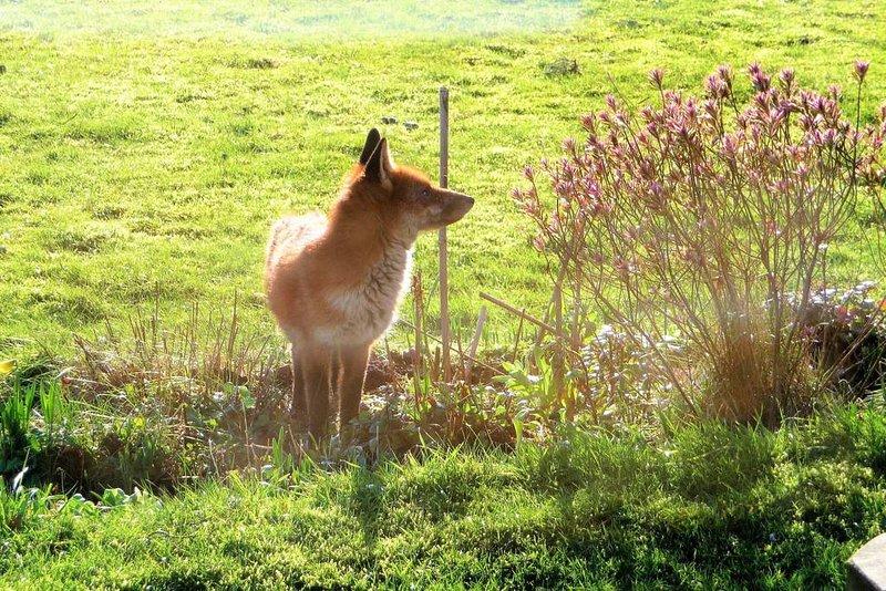 Eche un vistazo al zorro