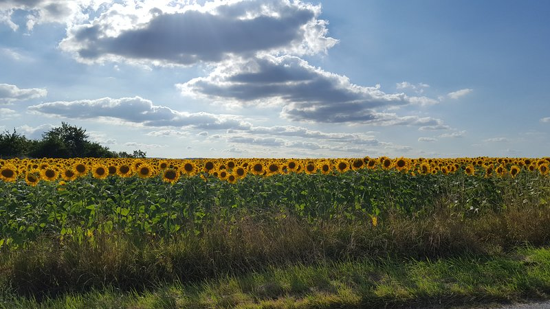 The view from the front of the house changes every year from sunflowers to maize to rapeseed