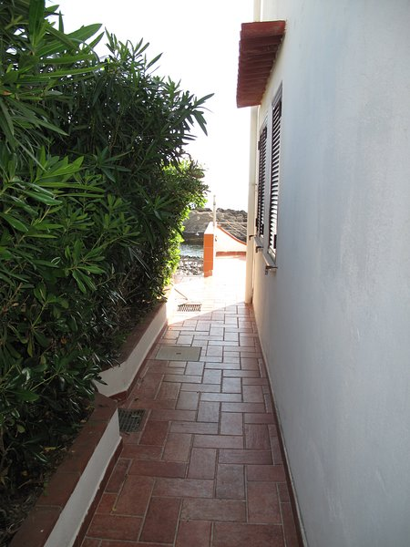 Enclosed access driveway with high green hedge mt. 2 for privacy that introduces a terrace in front of it