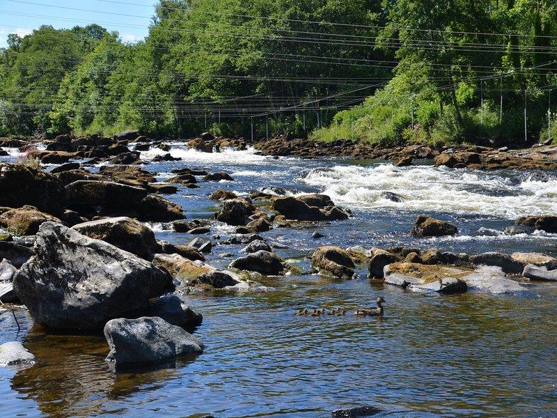 Sente-se e relaxe assistindo a vida selvagem local