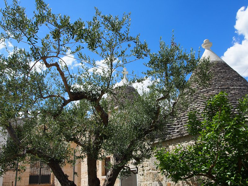 Trullo Monte Olimpo 5, holiday rental in Alberobello