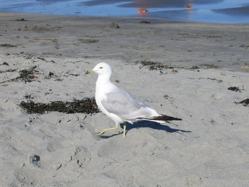 Seagull enjoying the sunshine!