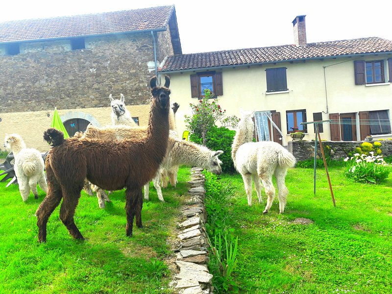 FERME LAMALPAPOCHE, holiday rental in Roumegoux