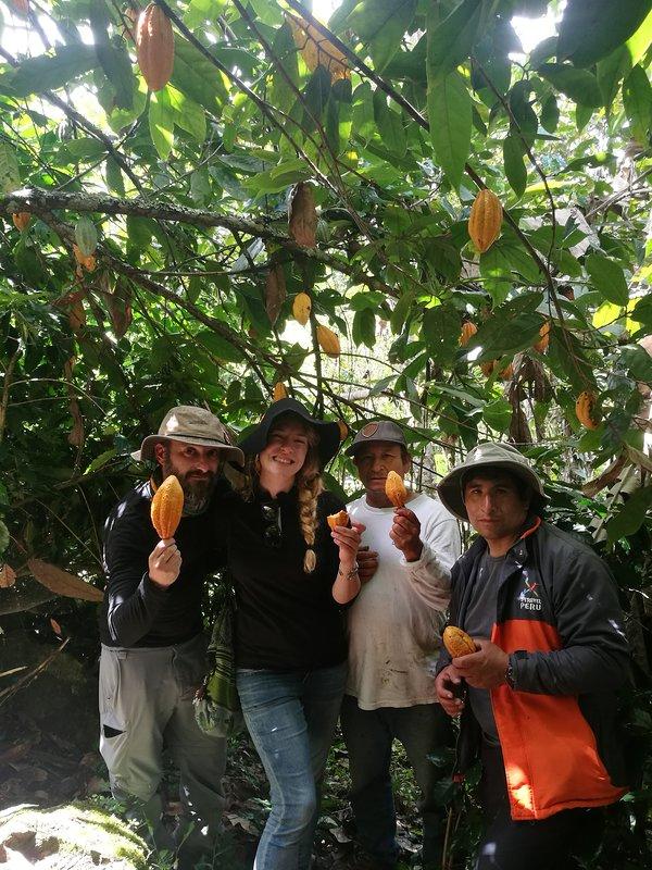 Cacao, oogsten om onze chocolade te maken