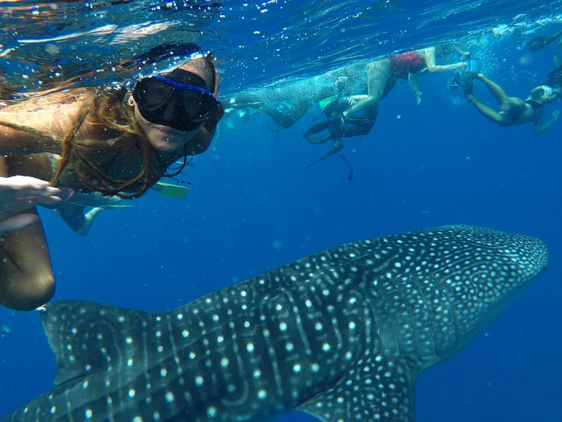 Whale shark snorkeling Tips