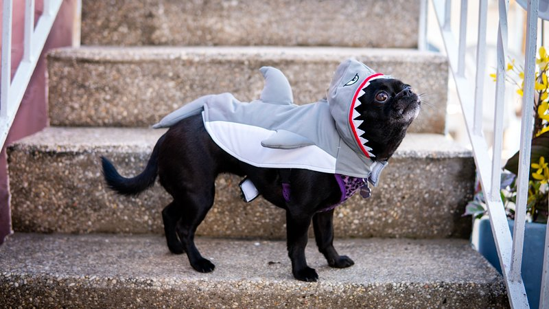 Pet friendly but not shark friendly...
