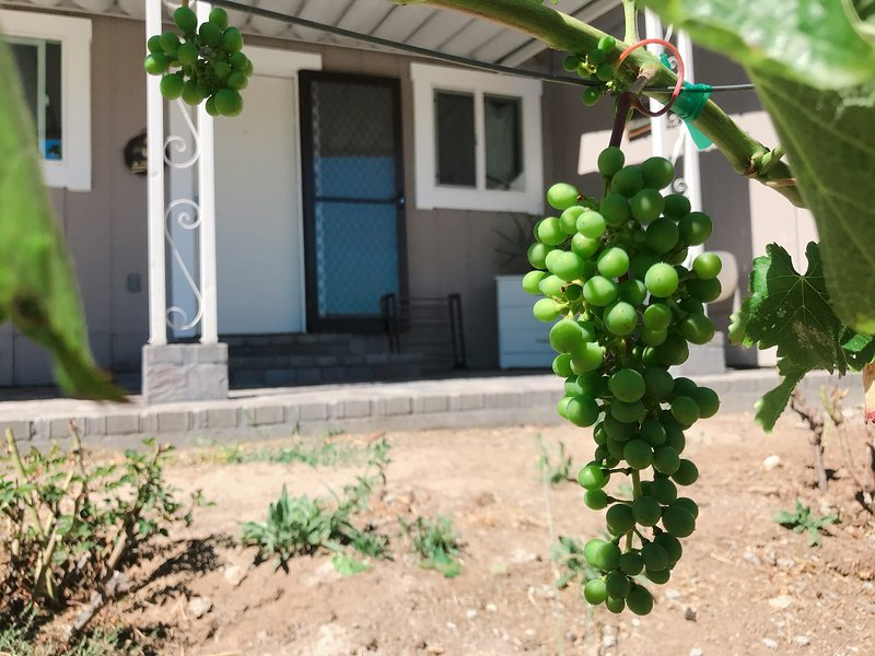 Newly Remodeled 'Vineyard's Found' Vacation Home, location de vacances à Santa Rosa