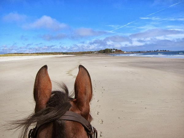 beach from horseback