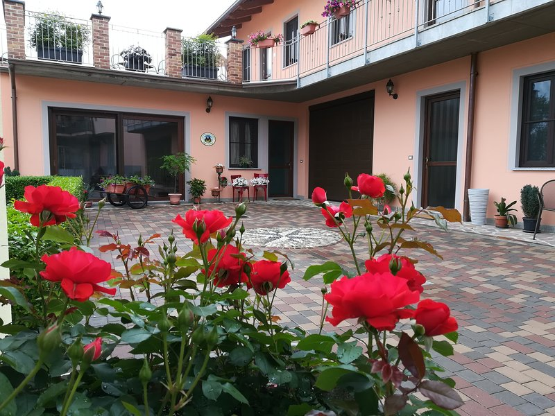 After the spring rain, our courtyard is so ...