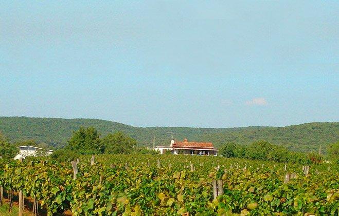 #FeWo #Rovinj #Istrien #Kroatien bei den #Weinfeldern, holiday rental in Rovinj