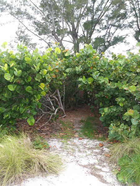 'fairy tale' path across street to Gulf beach