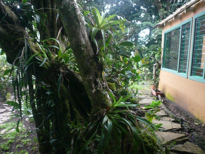 Les épiphytes abondent dans la région