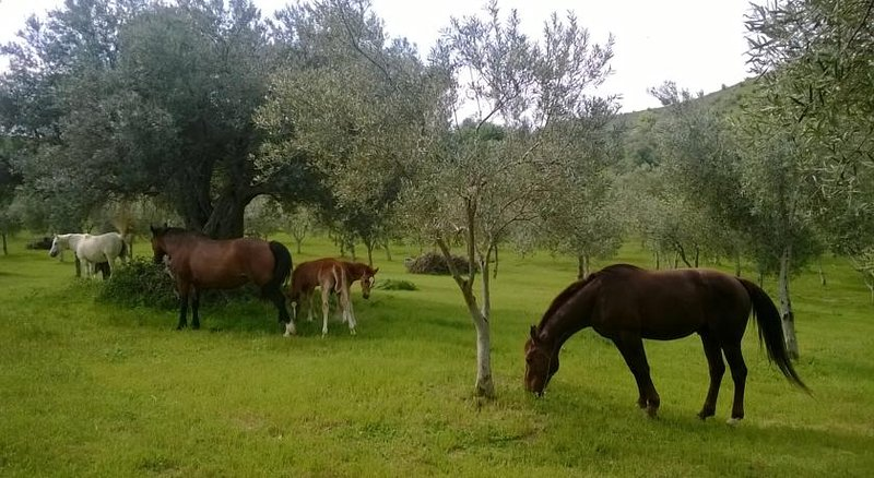 Guest House, holiday rental in San Nicola