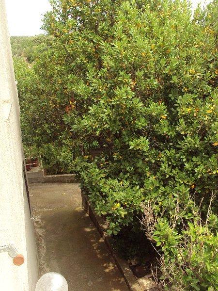strada per l'appartamento (alberi di alloro)