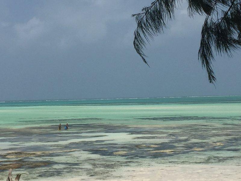 Mellow Moods Guesthouse Zanzibar - Double room shared bathroom, vacation rental in Michamvi