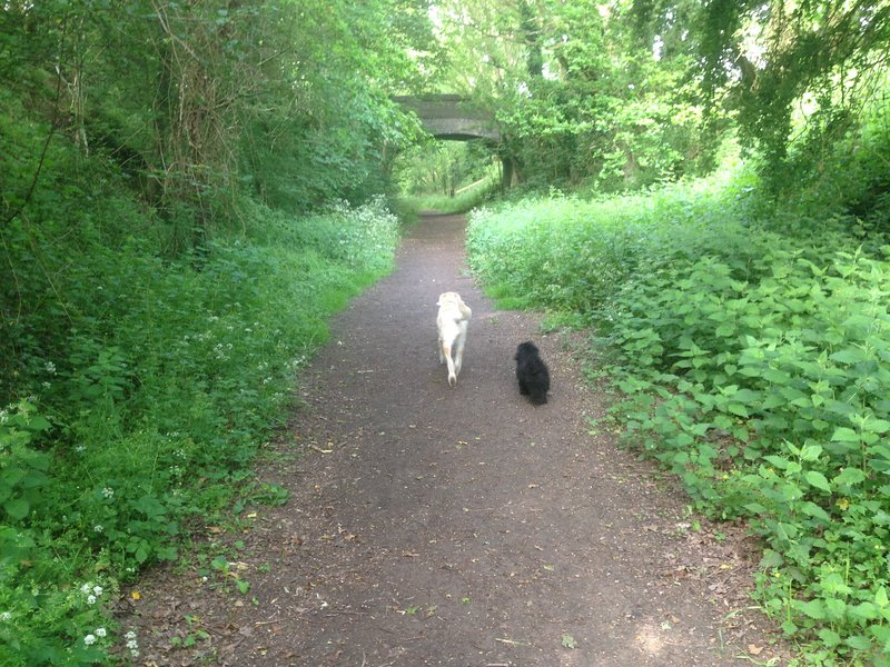 The cool and shady railway walk, leading to Pigney Wood, a nature reserve, and the Dilham Canal