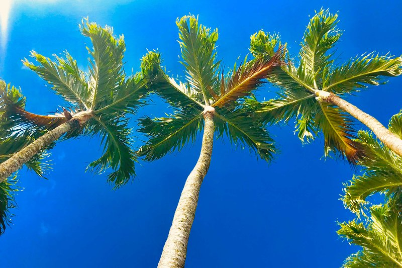 Palm trees swaying overhead will get you in the vacation mood!