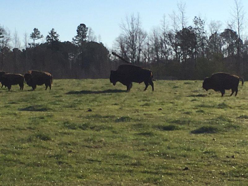 Bison Farmhouse in Greensboro / Lake Oconee, alquiler de vacaciones en Greensboro