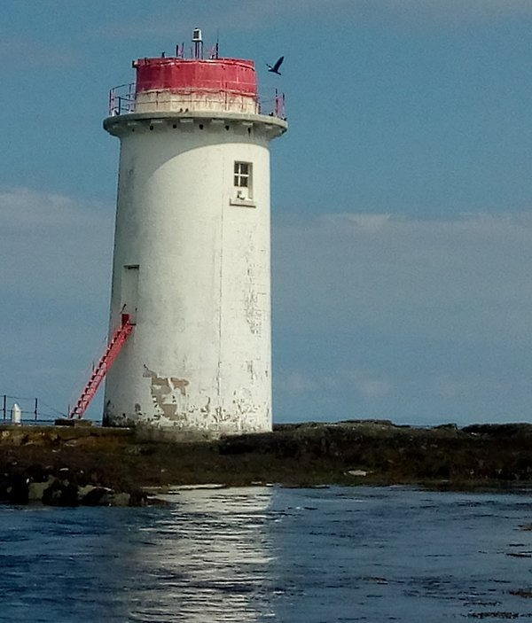 A cormorant lands on the lighthouse on Rock Angus at the entrance to Strangford Lough.