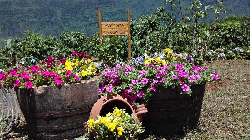 Granny´s farm cottage A, location de vacances à Sao Vicente