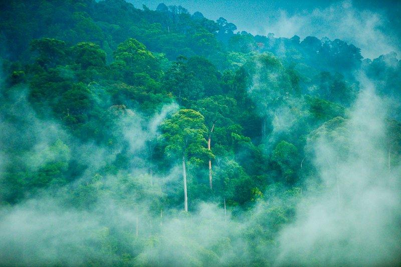 The Berembun Forest Reserve. A view from Spyder Hill Villa.