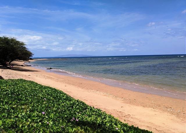 Maui Sunset 409B 1 bedroom, 2 bath with ocean views!, holiday rental in Kihei