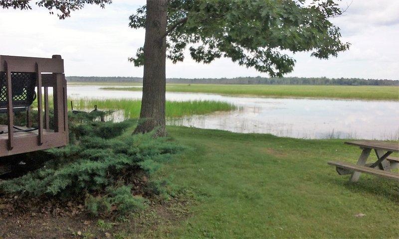 Vista desde el patio lateral al lago. Hay peces en ese arroz salvaje que ves.