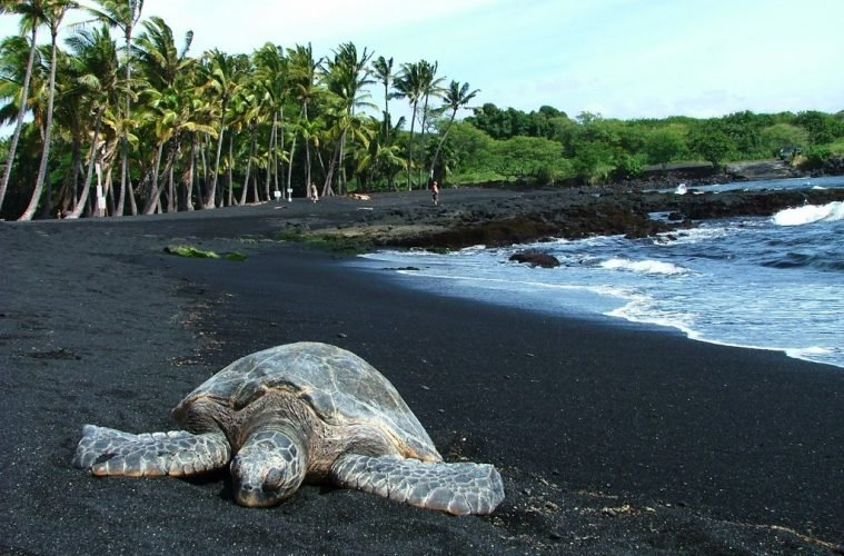 Black Sands Beach where there are always turtles
