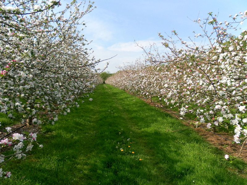View through the on site orchard