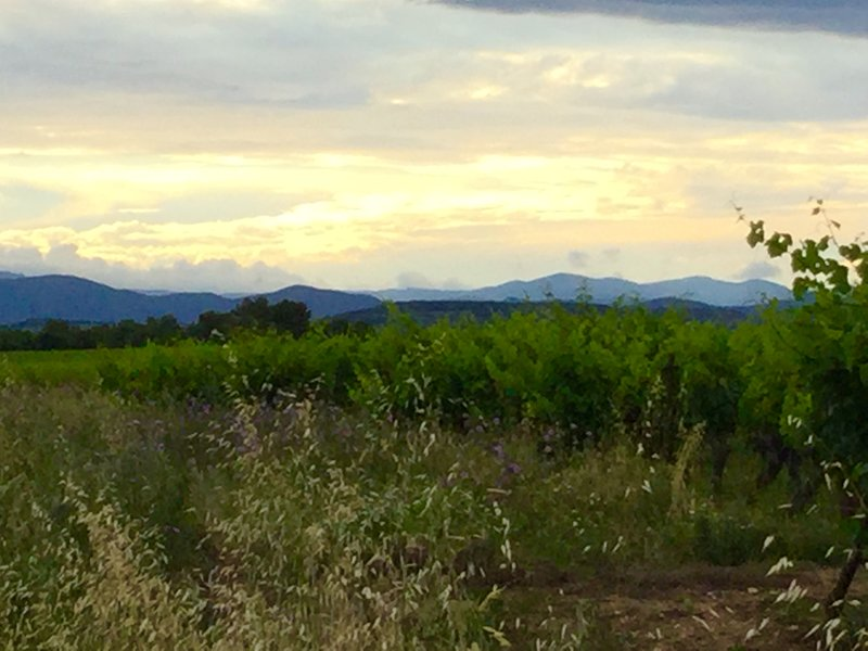 Vineyards abound locally where you can taste and buy wine
