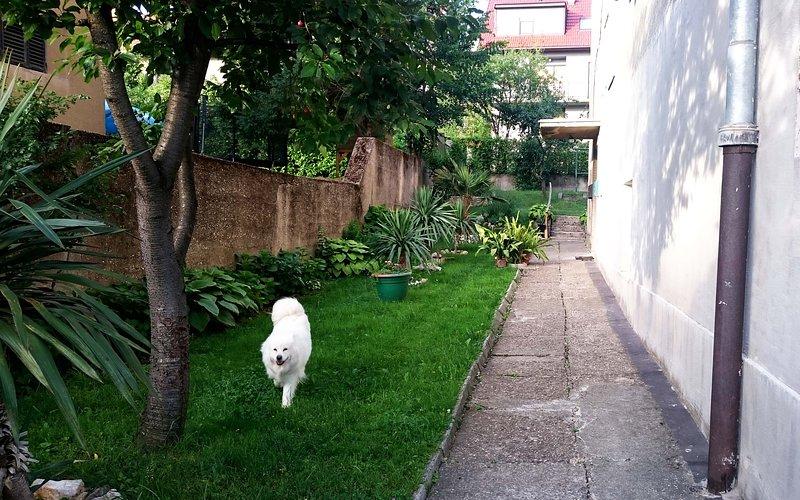 Family dog Luna in the backyard