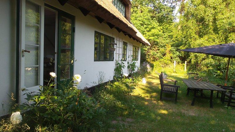 The house, garden, south