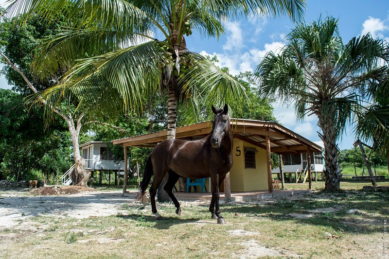 the cabin with Shiva the Horse