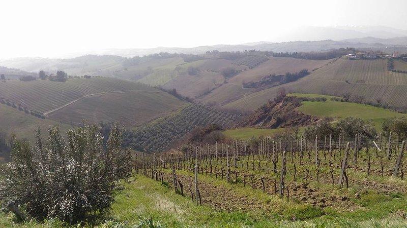 Le palme e le vigne, holiday rental in Colli Del Tronto