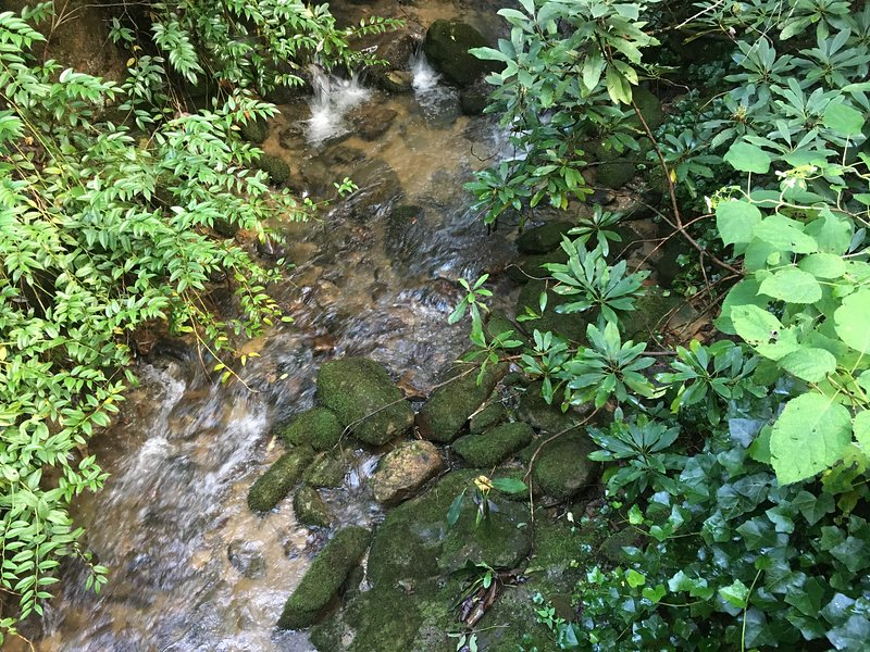 Dismal Creek - one of two rushing creeks on the property.