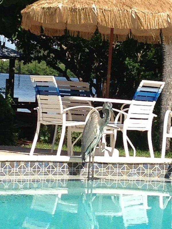 TripAdvisor - Sunburst Condo Unit 142 Englewood Florida on ...
