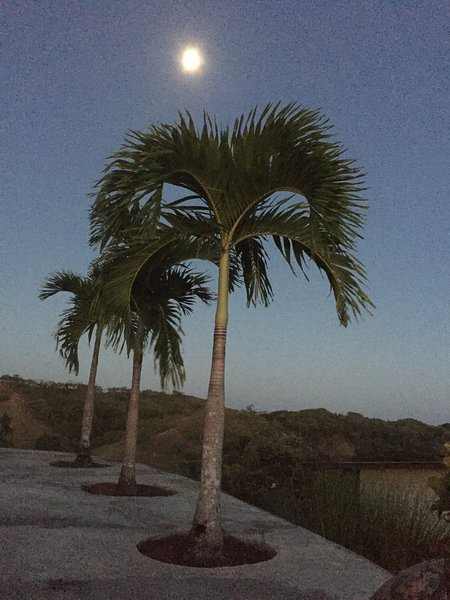 Moon Over Palm ...